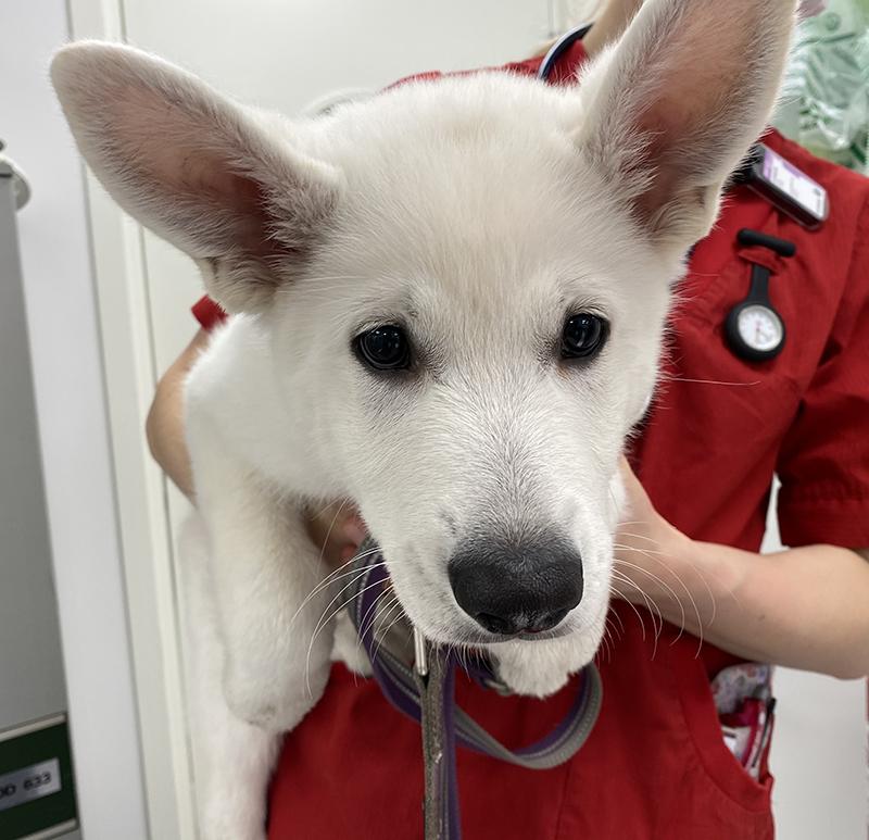 uvm-vit-hund